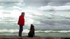 Bilge ve Köpek