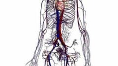 İnsan Vücudunun 3 Boyutlu Görüntüsü, Google' dan